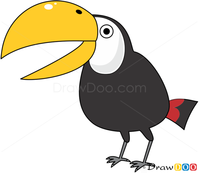 How to Draw Toucan, Birds