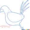 How to Draw Pheasant, Birds