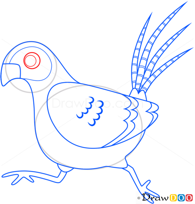 How to Draw Pheasant, Birds
