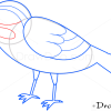 How to Draw Sparrow, Birds