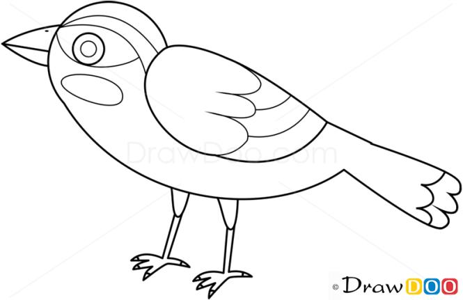 How to Draw Sparrow, Birds