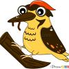 How to Draw Woodpecker, Birds