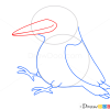 How to Draw Woodpecker, Birds