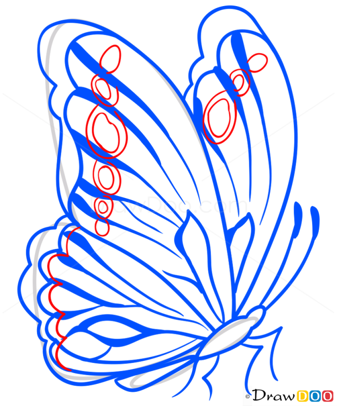 How to Draw Amazing Butterfly, Butterflies