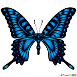 How to Draw Blue Butterfly, Butterflies