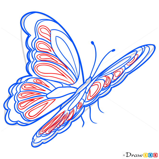 How to Draw Bright Butterfly, Butterflies