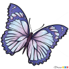 How to Draw Lilac Buttefly, Butterflies