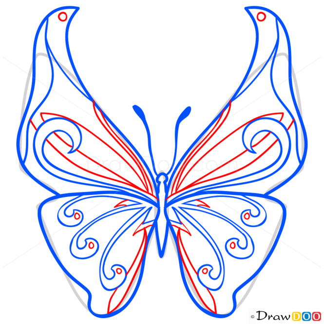 How to Draw Motley Butterfly, Butterflies