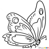 How to Draw Pied Butterfly, Butterflies