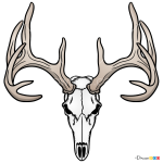 How to Draw Deer Skull, Deer
