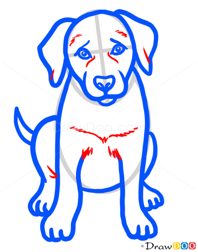 how to draw puppy labrador retriever dogs and puppies