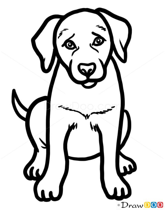 puppy drawing.  How to Draw Puppy Labrador Retriever Dogs and Puppies
