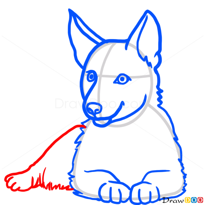 How to Draw Puppy, German Shepherd, Dogs and Puppies