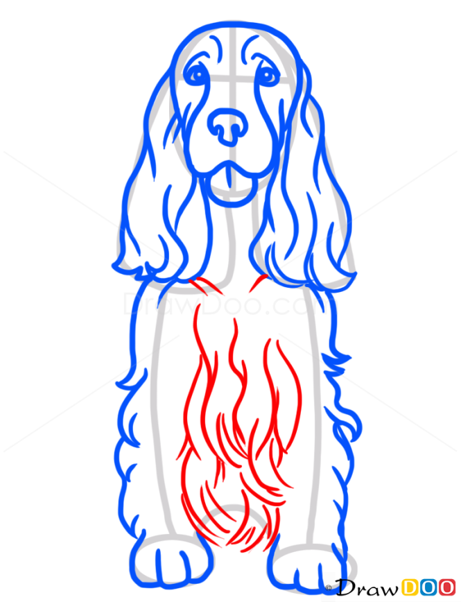 How to Draw Cocker Spaniel, Dogs and Puppies
