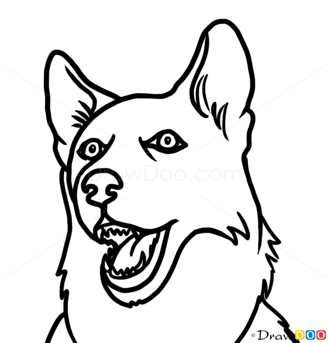 Line Drawing Of A Dog S Face : How to draw husky face dogs and puppies