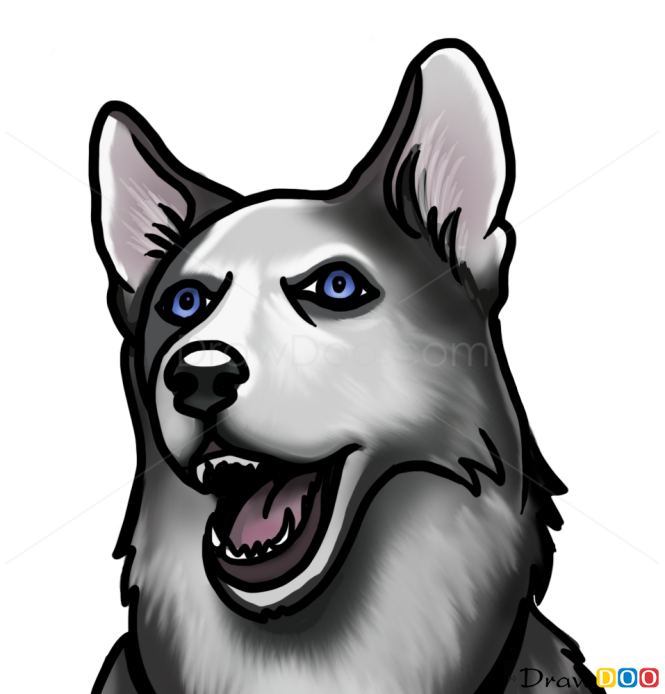 How To Draw Husky Face Dogs And Puppies