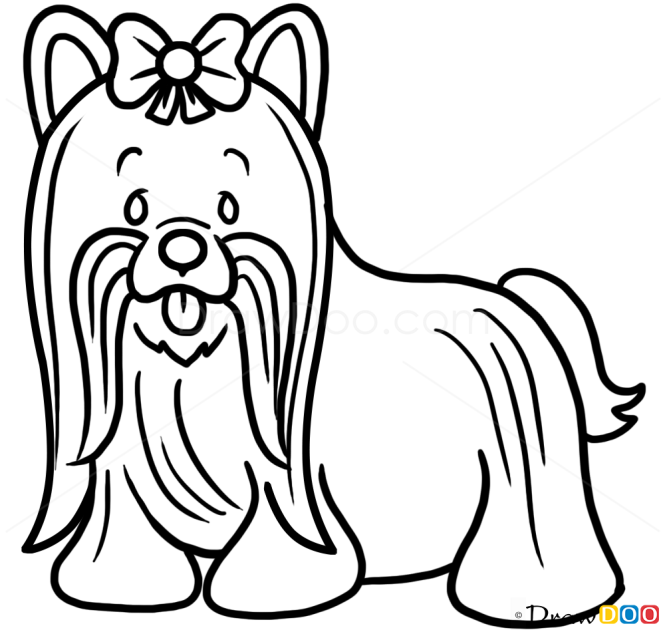 How To Draw Yorkshire Terrier Dogs And Puppies
