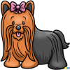 How to Draw Yorkshire Terrier, Dogs and Puppies