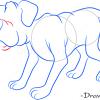How to Draw Dog, Farm Animals