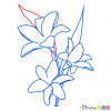 How to Draw Lily, Flowers