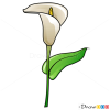 How to Draw Callas, Flowers