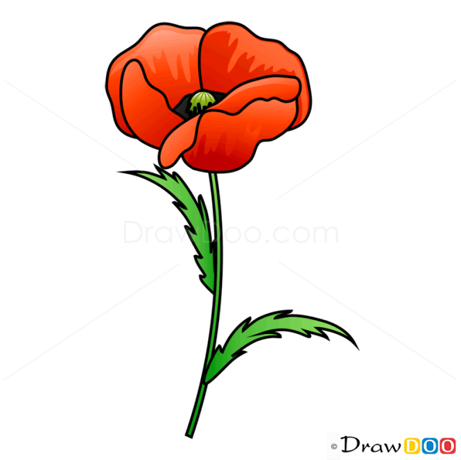 How to draw poppy flowers mightylinksfo