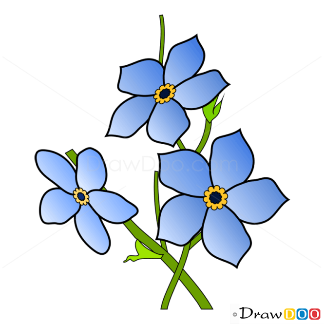 How To Draw Forget me not Flowers