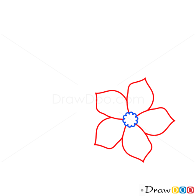 Drawing Lines With Php : How to draw forget me not flowers