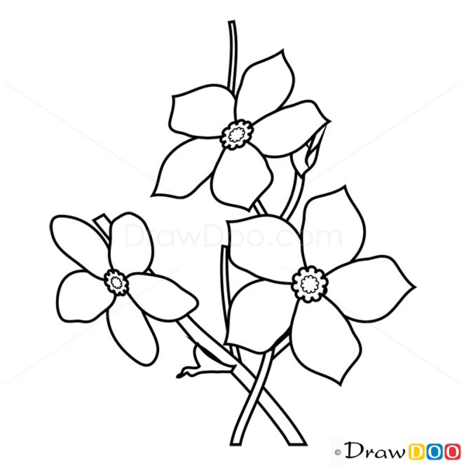 How to draw forget me not flowers ccuart Image collections