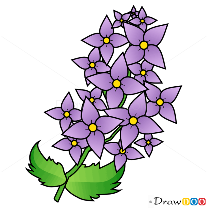How to Draw Lilac, Flowers