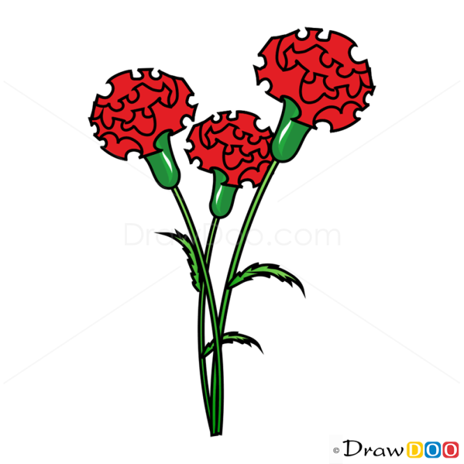 how to draw a red carnation step by step
