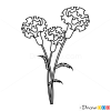 How to Draw Carnation, Flowers