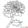 How to Draw Peony, Flowers