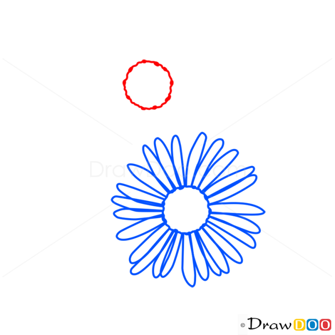 how to draw aster, flowers, Beautiful flower