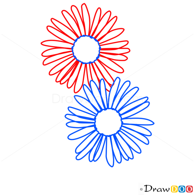 How to Draw Aster, Flowers