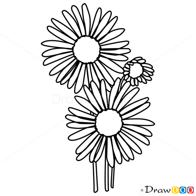 Aster Flower Line Drawing : How to draw aster flowers
