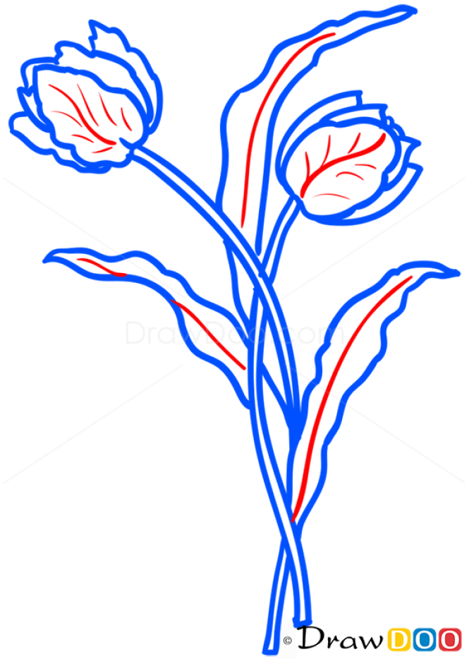 How to Draw 2 Tulips, Flowers