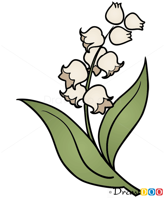 How To Draw Lily Of Valley Flowers