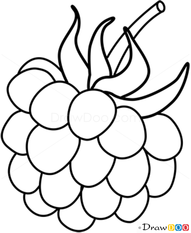 how to draw raspberry fruits