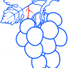 How to Draw Grapes, Fruits