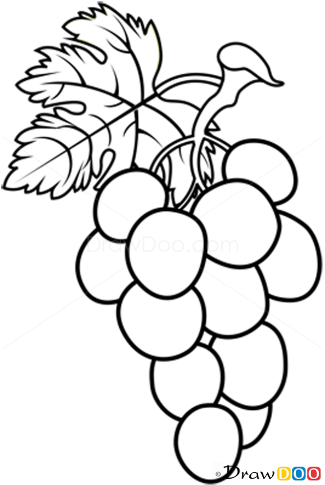 Line Art Fruits : How to draw grapes fruits
