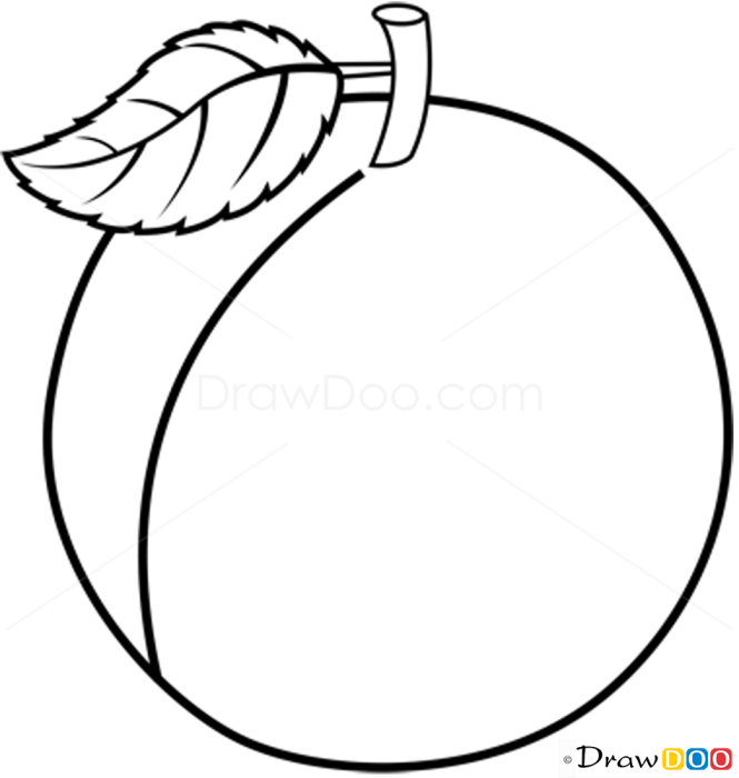 How to Draw Apricot, Fruits