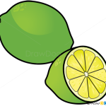 How to Draw Lime, Fruits