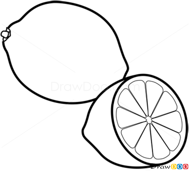 Line Drawing Fruit : How to draw lime fruits