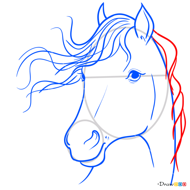How to Draw Horse Portrait, Horses and Unicorns