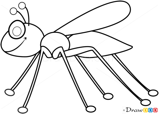How to Draw Cricket, Insects