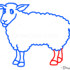 How to Draw Sheep, Kids Draw