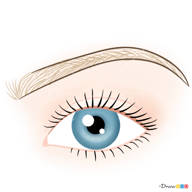 How to Draw Natural Eyebrows, Makeup