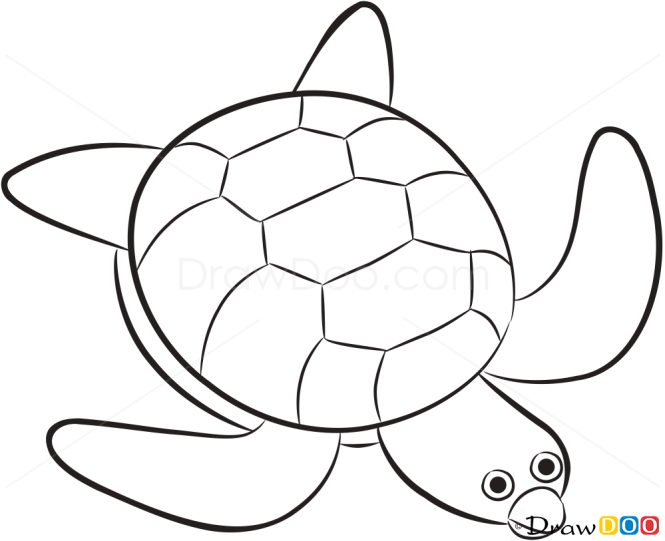 Pictures Of Sea Animals To Draw