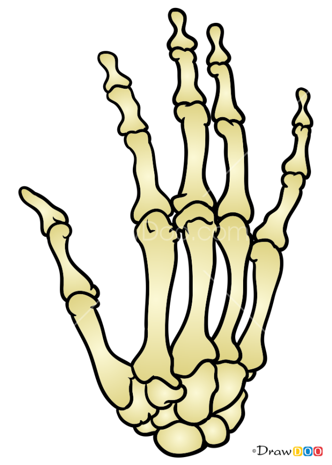 How to Draw Hand Bones, Skeletons